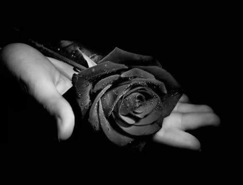 Resultado de imagem para flor negra luto