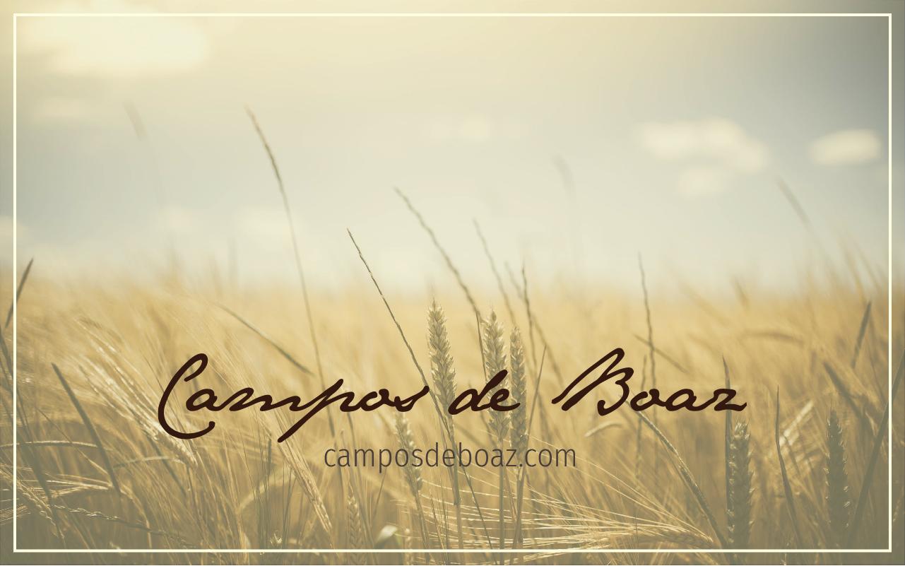 São tão vastos os Teus campos, ó amado Boaz celestial!