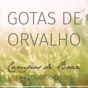 Gotas de orvalho (201)