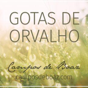 Gotas de orvalho (221)
